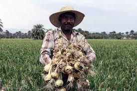 نتایج سفر وزیر جهاد کشاورزی به استان کرمان اعلام شد