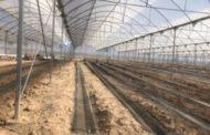احداث ۱۸هکتار گلخانه هیدروپونیک مدرن در شهرستان عنبرآباد