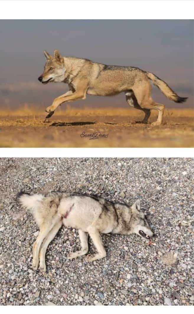 مراقب گونههای کمیاب حیوانات باشیم