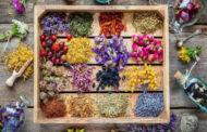 کرمان ،بهشت گیاهان دارویی