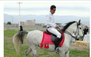 توسعه صنعت پرورش اسب در جنوب کرمان